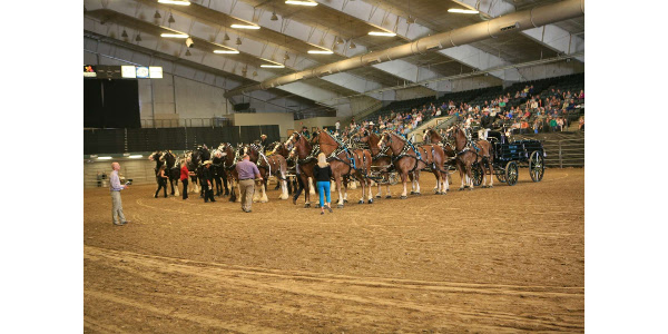 14 six horse hitches enter Dakota Royal