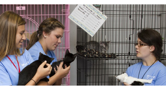 Youth become veterinarians in training
