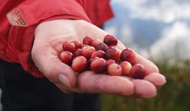 Cranberry industry may face retaliatory tariffs