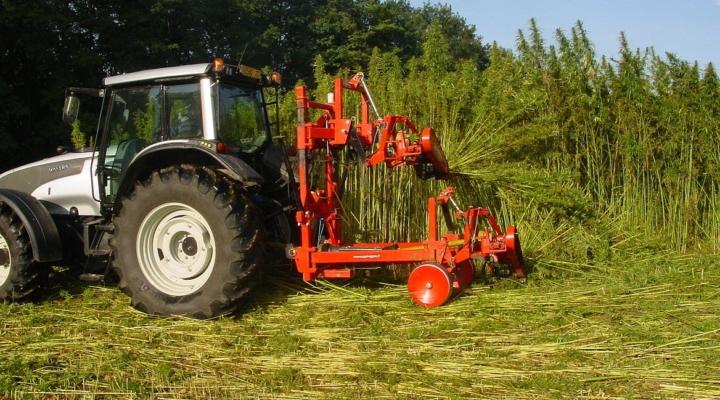 Western Milling to distribute certified hemp seed