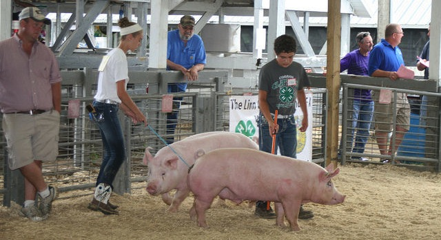 4-H Animal Fun Day, June 9th