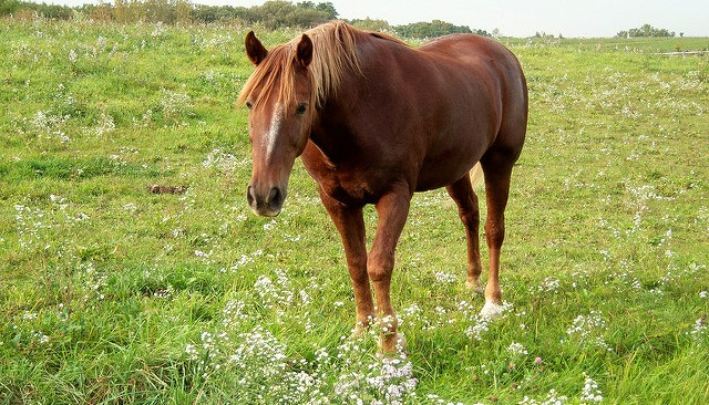 Vaccinating against rabies? Don't forget your horse