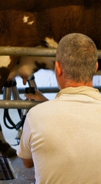 USDA appoints members to national milk board
