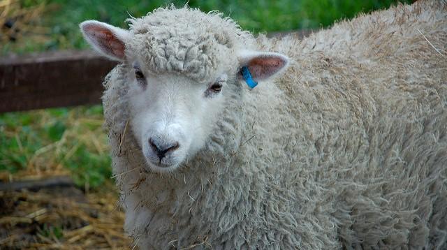 Senate farm bill good news for upstate clothier