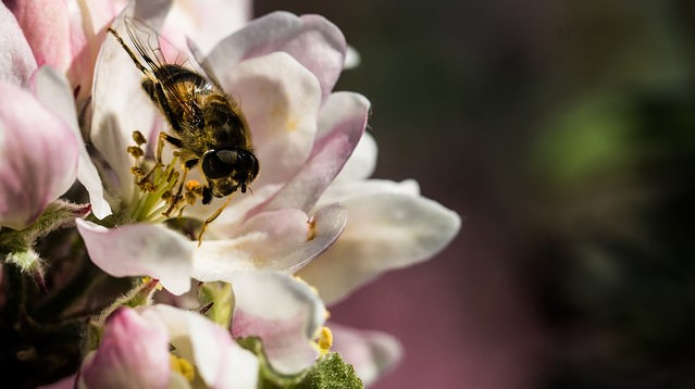 USDA NIFA to invest in pollinator health