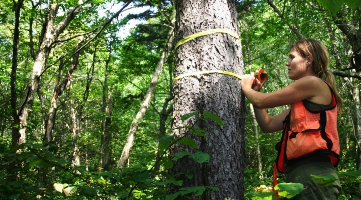 Researchers fund surprising recovery of red spruce