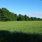 `Forests in Michigan's Upper Peninsula pose a great challenge and opportunity to agriculture. (Photo by Ashley McFarland, Michigan State University Extension)