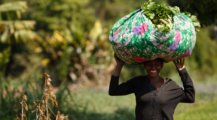 Rockefeller Foundation, FAO to halve food loss in Africa