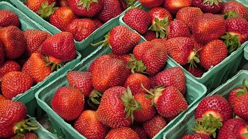 Plattsburgh market adds to season's events