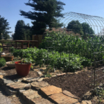The Demonstration Garden is located at the Springfield Botanical Gardens, 2400 S. Scenic Ave. Springfield, Missouri 65807. The gardens are open dawn to dusk and admission is free. (Courtesy of University of Missouri Extension)