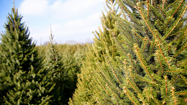 Christmas Tree Farmers to hold summer meeting