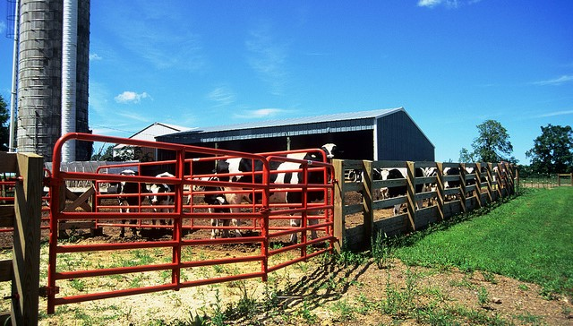 Dairy Improvement Fund loan program announced