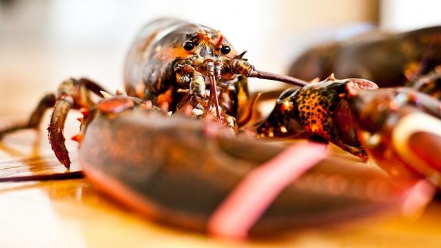 China threatens tariffs on US lobsters