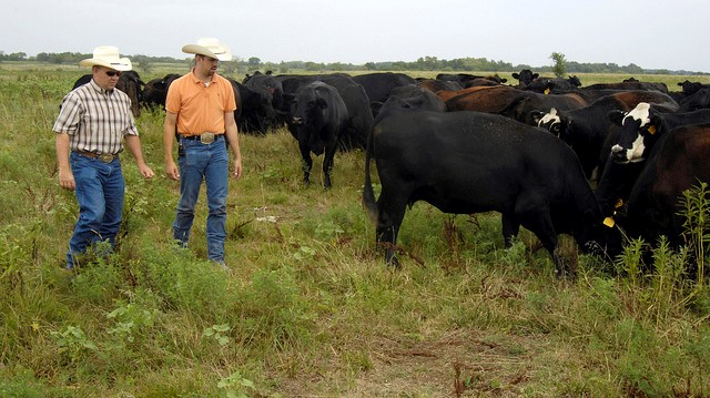 New tool helps livestock farmers price for profit