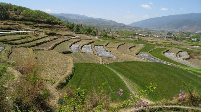 China's small farms overusing chemicals