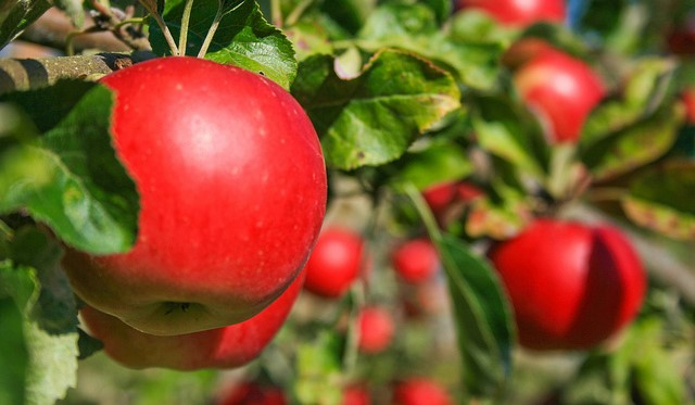 Apple growers worry about tariff retaliation