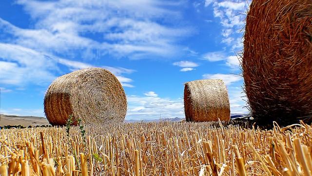 New Hay Hotline website unveiled