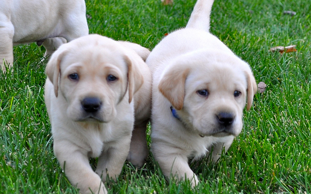 House bill would force pet shops to sell only rescue pups