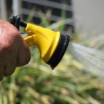 hose, watering