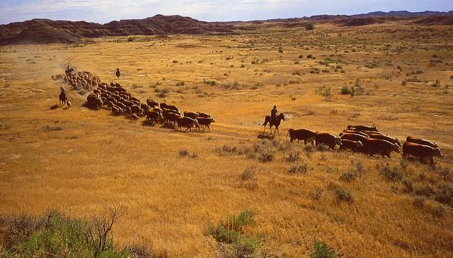 OCA Cattlemen's College Session 2