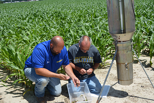 Trapping bugs, helping farmers