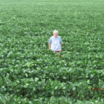Caryl, Nelson Smith's mother, stands in soybeans on the Smith farm. Nelson will host a PFI field day on Wednesday, July 11, from 10 a.m. to 1 p.m. on his farm near Brighton, exploring mechanical weed control for organic crop production. (Courtesy of Practical Farmers of Iowa)