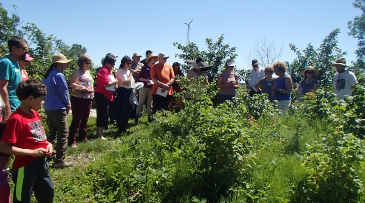 Wildflower Pollinator Habitat Tour