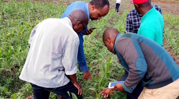 African farmers' newest ally against Fall Armyworm