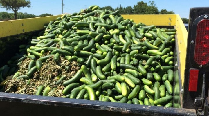 Resources help calculate food waste on the farm