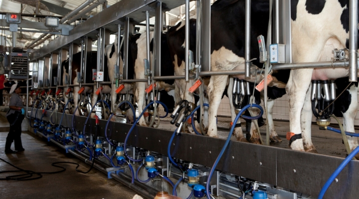 UF experts provide tips for National Dairy Month