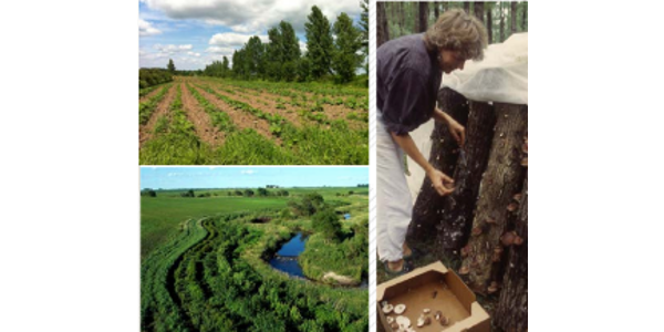 Clockwise from lower left: Riparian forest buffers, Hybrid poplar-hazelnut-pumpkin alley cropping system, and forest farming –mushroom production. (photo credit: UMCA)