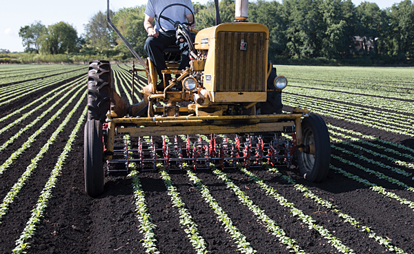 Mechanical weed control farm tour June 13