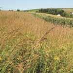 A new educational video designed to offer insight and support to agriculture and conservation professionals interested in private consulting is now available from Iowa State University Extension and Outreach. (Courtesy of ISU Extension and Outreach)