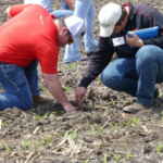 Participants in the Summer Crop Management Clinic will get to enter several of the Field Extension Education Laboratory field test plots to learn about crop scouting, as well as crop and pest management. Courtesy of ISU Research and Extension)