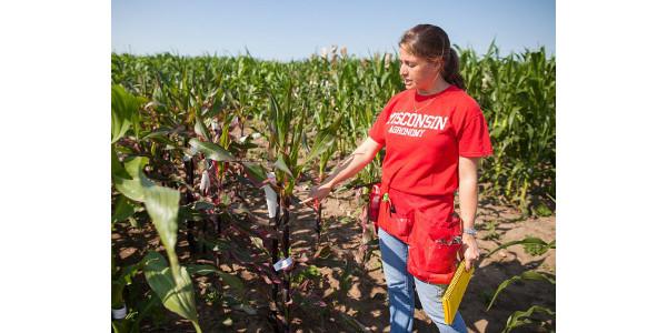 Corn conundrum
