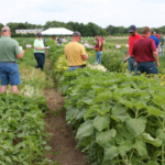 The 2018 Field School for Ag Professionals will be held on July 25 - 26 at the University of Minnesota Agriculture Experiment Station in St. Paul. (Courtesy of University of Minnesota Extension)