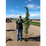 A Palmer amaranth plant towers over Alicia Harstad, an agent in NDSU Extension's Stutsman County office, during a visit to Nebraska to learn how university specialists, agricultural consultants and producers control the invasive weed there. (NDSU photo)
