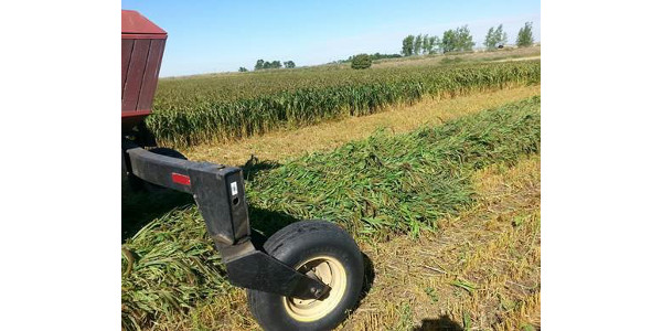 Warm-season annuals may be forage option