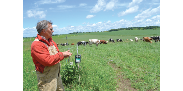 Chuck Henry watches his dairy herd graze a mix of winter wheat and Sudan grass. (Courtesy of Land Stewardship Project)