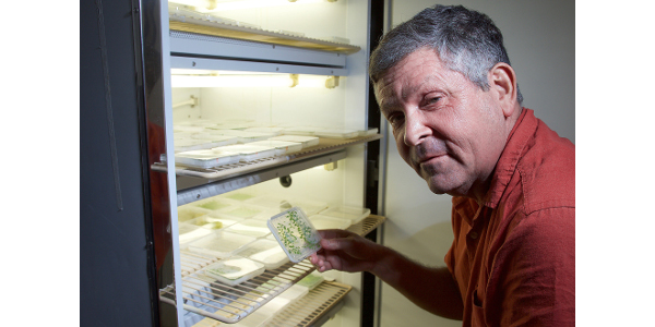 Purdue University's Joe Ogas led a study that showed how plants using repressive states to control gene expression can quickly and easily destroy that repressive state. The findings may be key to developing new ways to control plant gene expression. (Courtesy of Purdue University)