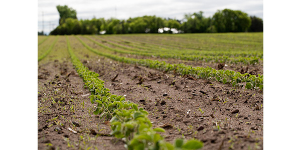 Managing sulfur in soybeans | Morning Ag Clips