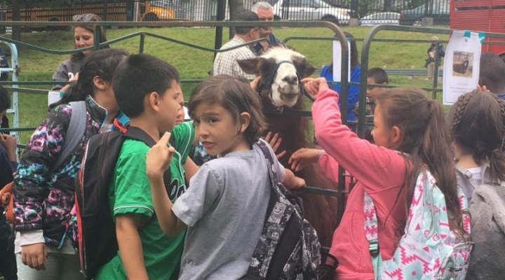 Young farmers bring livestock to Boston Common