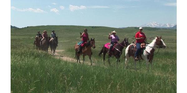Colorado Horse Council seeks committee members