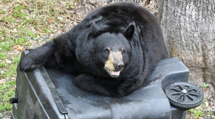 FWC offers additional BearWise funding