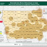 A destructive pest of ash trees has now been confirmed in Buchanan, Hamilton, Hardin and Pottawattamie counties. (Courtesy of IDA)