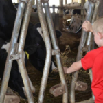 The free, family-friendly event will provide guests with an opportunity to see first-hand where the dairy products they enjoy get their start.(Courtesy of South Dakota Farm Families)