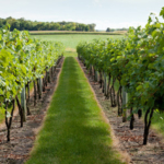The University of Minnesota Extension Women in Ag Network's summer tour is scheduled for July 13 at Millner Heritage Winery and Schiefelbein Farms in Kimball. (Courtesy of University of Minnesota Extension)