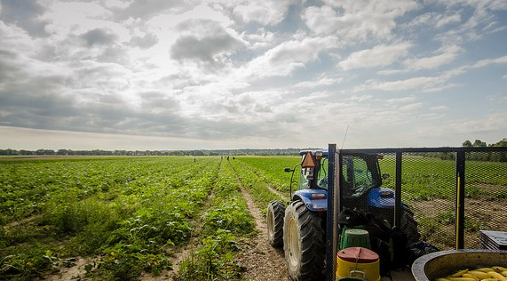 Growers held liable for wage theft violations