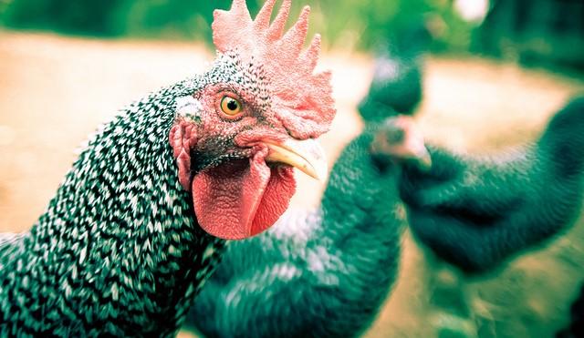 Dispute over dumped chicken manure settled