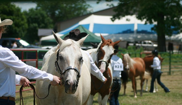4-H horse clubs teach youth to ride tall